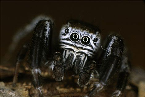 scary and creepy people | Creepy Animal Pictures -- National Geographic Kids