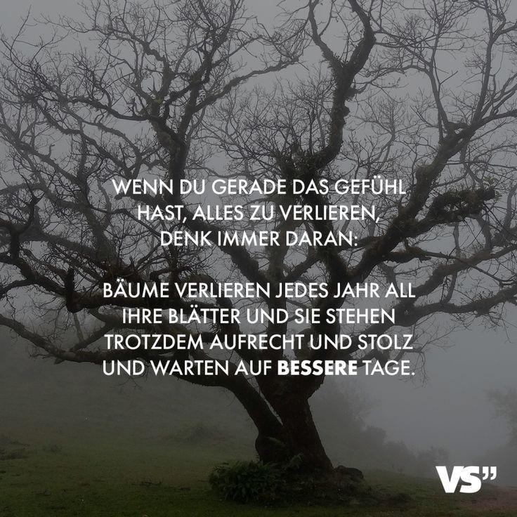 Visual Statements Wenn du gerade das Gefühl hast, alles zu verlieren, denk ich immer daran: Bäume verlieren jedes Jahr all ihre Blätter und sie ste…