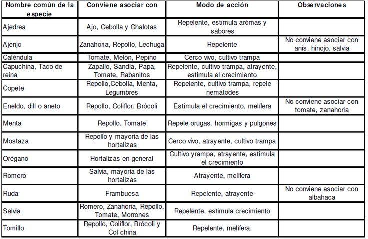 Huerta Orgánica: Aromaticas