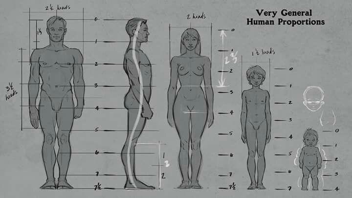 Aaron Blaise   Figure drawing tutorial, Human body drawing ...