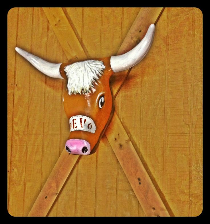 Decoration Wall hanging longhorn University Texas Bevo Man Cave dorm hand painted art bull cow roping steer head plastic UT college mascot by Tamsfrogs on Etsy https://www.etsy.com/listing/202219981/decoration-wall-hanging-longhorn