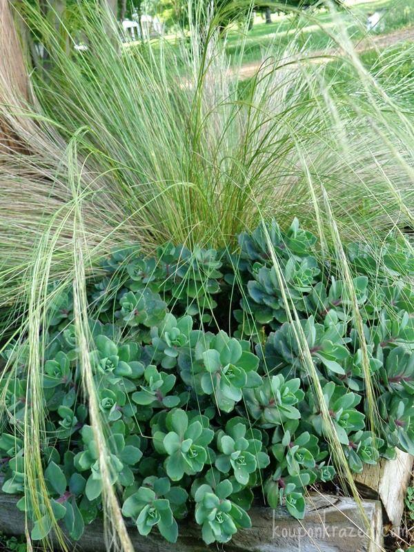 25 best circular garden ideas images on pinterest for Grass plants for flower beds
