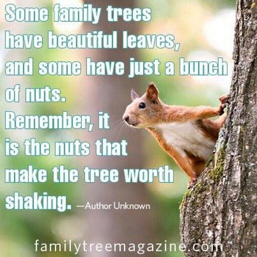 11 best book trades images on pinterest wise words from a squirrel my family tree has a bunch of nuts growing on some fandeluxe Choice Image
