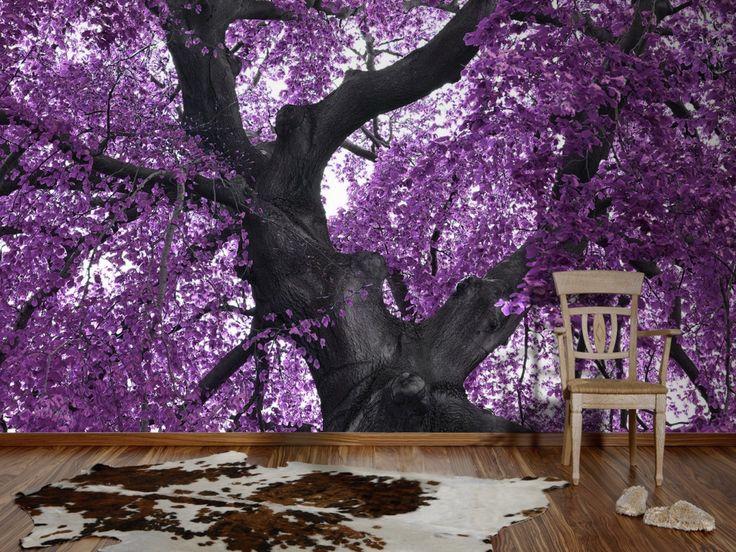 die besten 25 lila b ume ideen auf pinterest jacaranda. Black Bedroom Furniture Sets. Home Design Ideas
