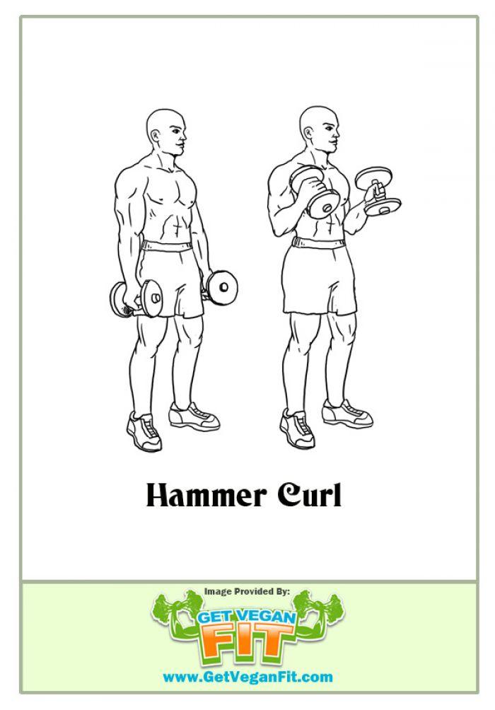 Standing Dumbbell Hammer Curls Bicep Arm Exercise Illustration