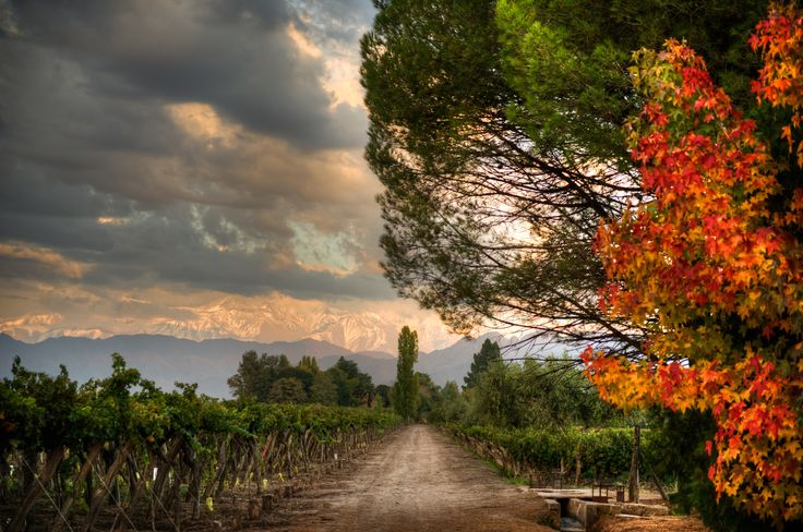 The beautiful Kaiken vineyards in Argentina looking out over the Andes, stunning www.bcfw.co.uk