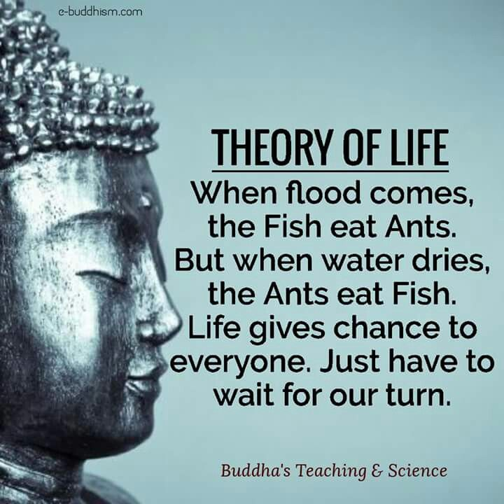 25+ Best Ideas About Buddhist Sayings On Pinterest