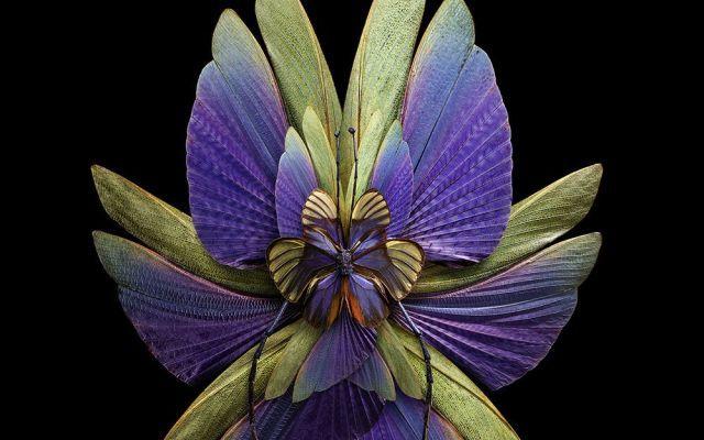 LE ALI D'INSETTO DIVENTANO FIORI NELLE FOTO DI SEB JANIAK La serie Mimesis, del fotografo parigino Seb Janiak, è ispirata al mimetismo evolutivo. E' realizzata fotografando ad alta risoluzione le ali degli insetti e componendole, poi, in forme che ricordano #arte #fotografia #farfalle #fiori