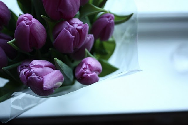 pretty: Cupcake, Purple Tulips, Perfectly Purple, Color Purple, Purple Haze, Flowers, Lavender, Purple Roses, Purple Floral