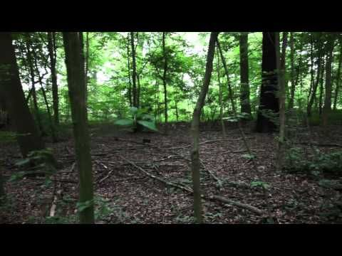 FOREST (for a thousand years), Cardiff and Miller at dOCUMENTA 2012