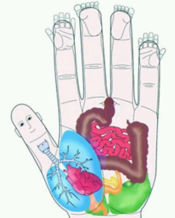 Tu salud en una mano con #Reflexologia, cada zona un órgano de tu cuerpo