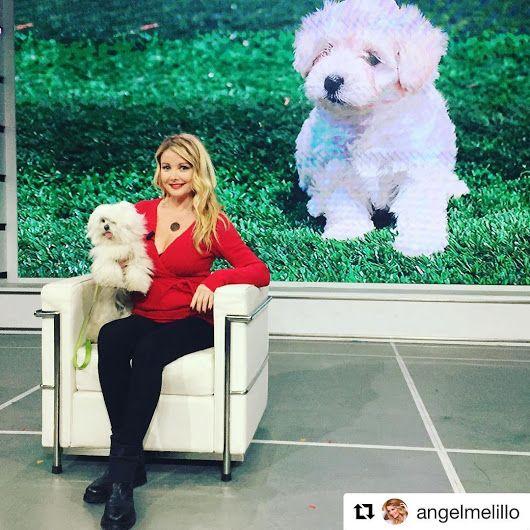 Angela Melillo indossa #STOKTON #FabioSfienti  https://instagram.com/p/BSEb93...