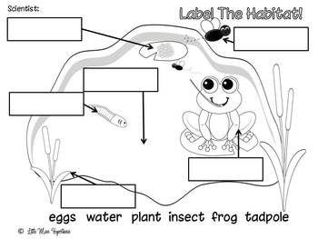 Frog Freebies! from Little Miss Kindergarten