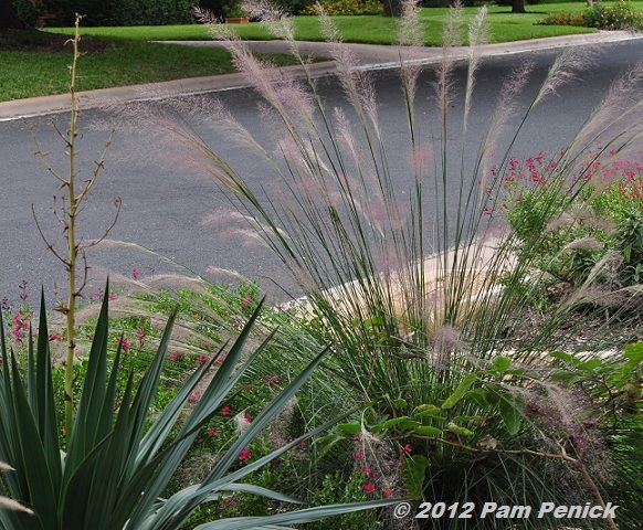 how to get rid of overgrown pampas grass