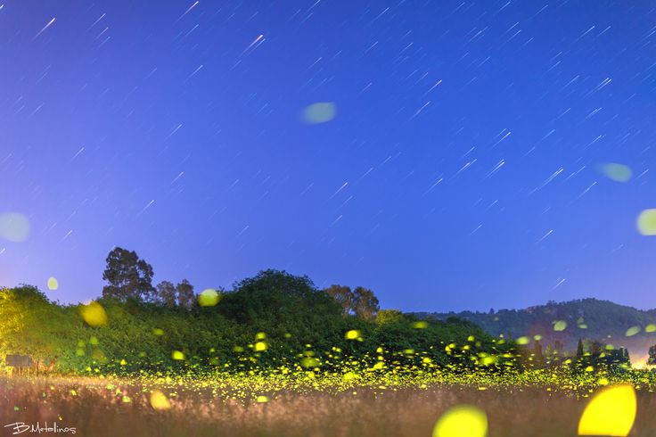 Ropa Valley in light of fireflies - Ropa Valley in light of fireflies  Stellar Traces over Livadi Ropa Corfu with fireflies play among the plants
