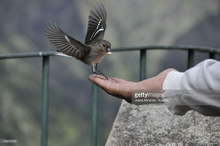Stock Photo : Close-Up Of Hand Feeding Bird