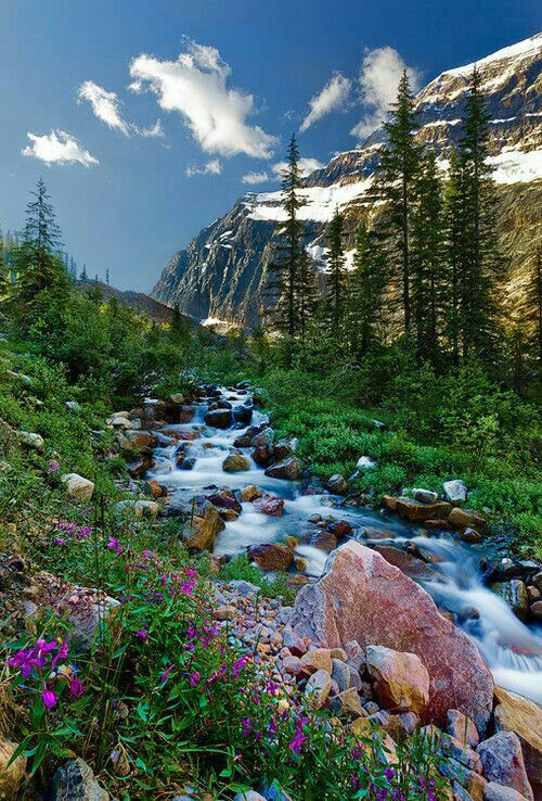#naturephotography #forest