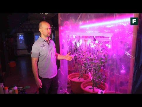 Выращивание помидоров зимой // FORUMHOUSE - YouTube