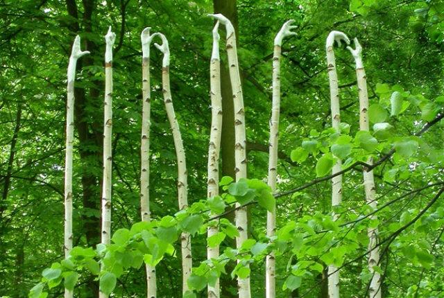 Rami di salice ed elementi naturali per le opere di Olga Ziemska      continua su: http://design.fanpage.it/rami-di-salice-ed-elementi-naturali-per-le-opere-di-olga-ziemska/#ixzz2EINH9kOX   http://design.fanpage.it