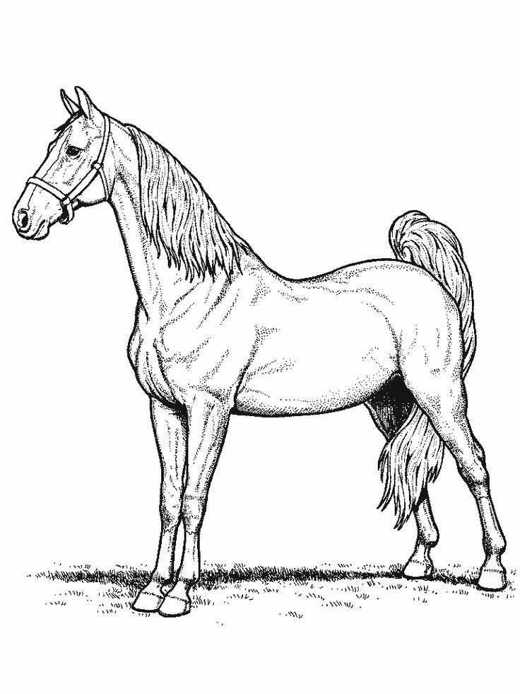 Coloring In Pages Horses : 47 best horse coloring pages images on pinterest
