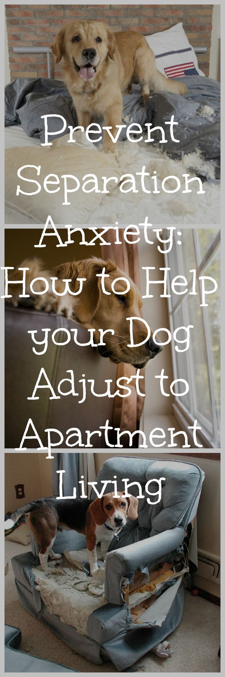 For many of us with pets, our animals are part of the family. But with busy work schedules, school, or running around with the kids, we might not have as much time with our dogs as we want. Here are a few tips to help your pet deal with pet anxiety.