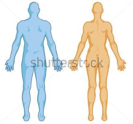 Mužské, Ženské Tělo Tvaruje à ¢ Â?â? Lidské Tělo Obrys à ¢ Â?â? Vektor Zadní Pohled Plné Tělo obrázky - ClipartLogo.com