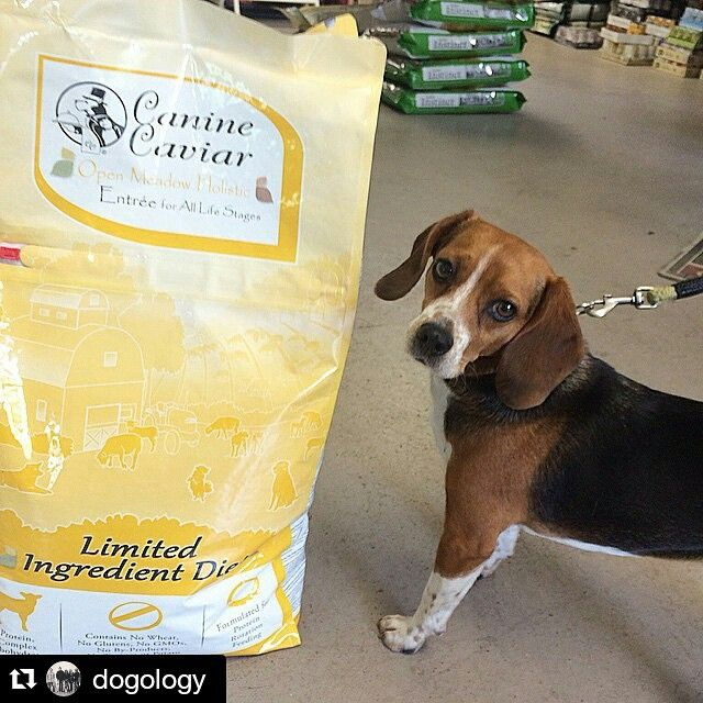 Don't like taking chances with your dog's food? Here's a good place to start.