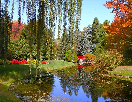 Pin By Roxanne Smith On Dow Garden 39 S Pinterest