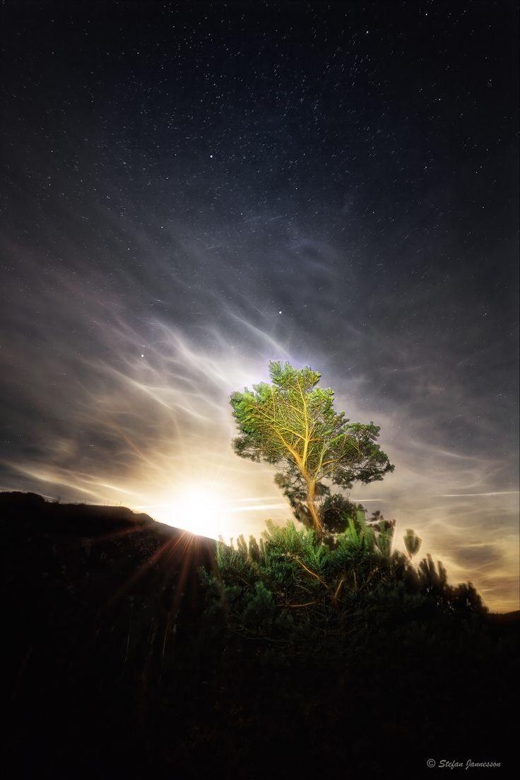 https://flic.kr/p/Btwugc | Tree enlighten