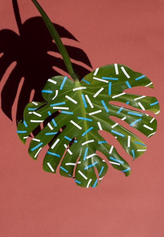 Wonderplants | Tape and stickers upgrade tropical plants, by the supreme talent Sarah Illenberger.