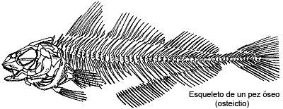 Anatomía de los peces