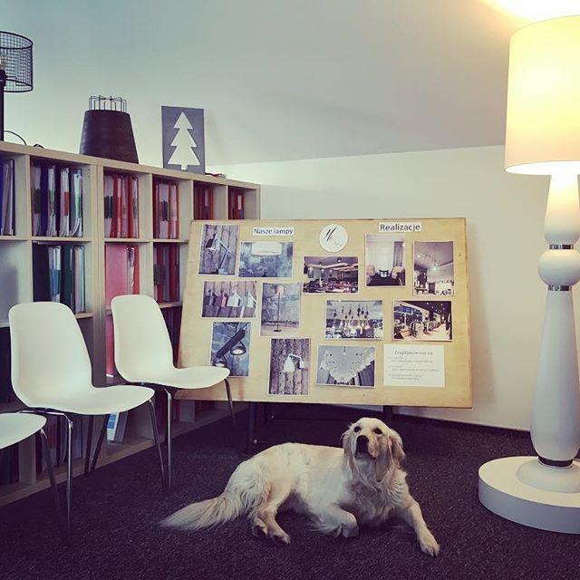 Luna przysparza tyle radości ❤🐕 ➡ Big White by Joanna Bardecka #dog #work #office #lovemyjob #goldenretriever #lamp #light #passion #design #decoration #inspiration #interior #interiordesign #homedecor #homedesign #officedecor #simple #quality #ideas #niezchinzpasji #instadaily #instagood #instapic #instaphoto #like4like #art #polscyprojektanci #officedesign #bestfriend