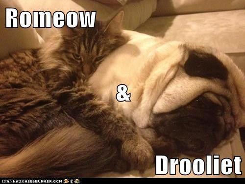 Romeow & Drooliet