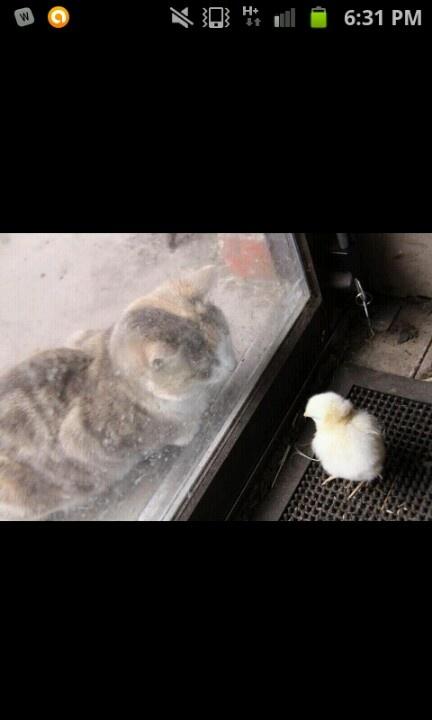 Please dont open the door!!!