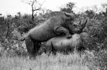 "Saatchi Art Artist David Rabie; Photography, ""Saving the Rhino - Limited Edition 1 of 12"" #art https://davidrabie.co.za/rhino"