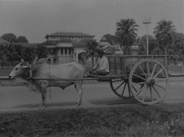 1931 oxcart in front of Istana Maimun, Medan. Sumatra.