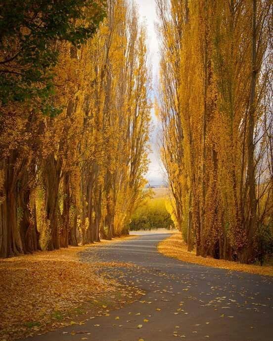 Derwent Valley ....     Final stages of Autumn ...TASMANIA