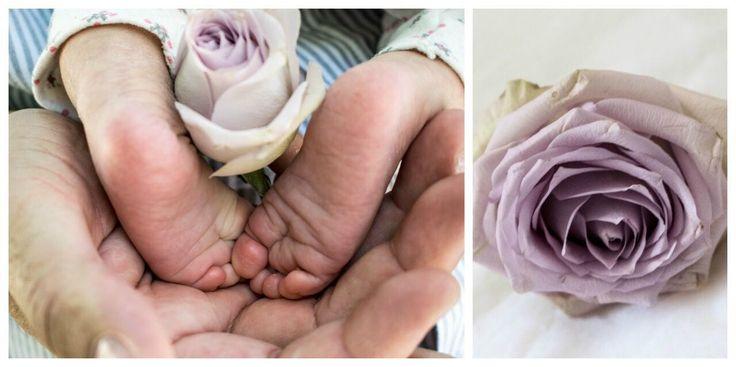 Newborn baby girl photoshoot in shades of purple flowers