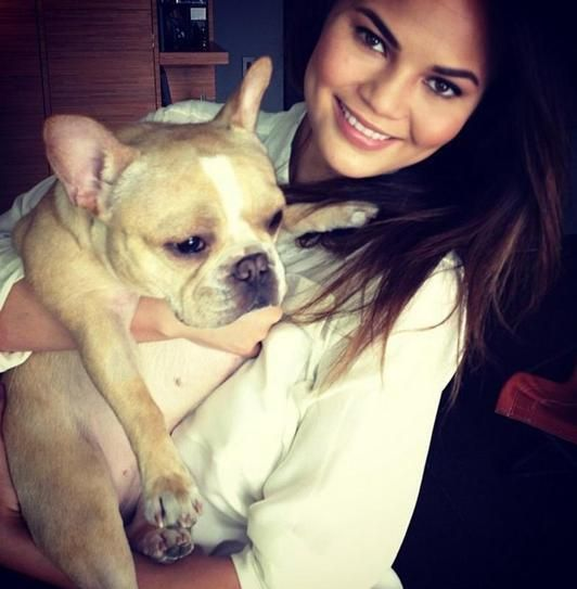 Chrissy Teigen's Frenchie, Pippa, has become quite famous via Chrissy's Instagram.  Photo: Instagram/ChrissyTeigen via StyleList | http://aol.it/1o6KaMl