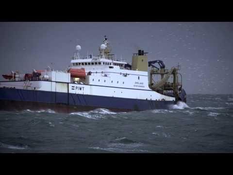 Fish Fairly (dt) Greenpeace Deutschland - Fischerei-Monster gehören abgeschafft! - Riesige Trawler in Aktion, wie sie den Ärmelkanal von Heringen leerfischen. Der Hering kommt jedes Jahr in das Gebiet, um zu laichen. Dadurch können sich die Fische nur schwer reproduzieren!