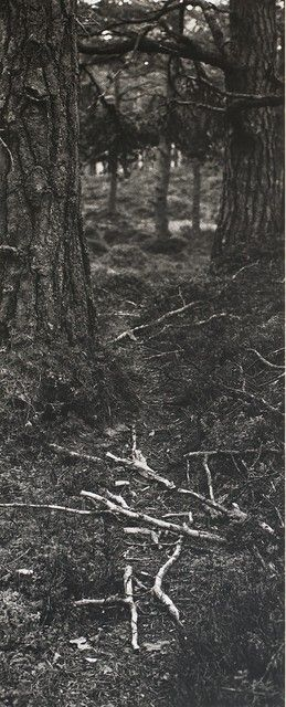 Hamish Fulton, 'HF Fallen Branches on a deer path,' 1985, Repetto Gallery