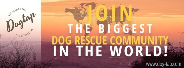 JOIN the biggest dog rescue community in the world!   23 billion people have a smartphone! This makes them a part of the biggest dog rescue community in the world!   Join us and get the innovative DOGTAP - ID tag for your dog!   With DOGTAP anyone can become a helper and savior for injured or missing dogs!   DOGTAP provides the fastest and easiest identification of dogs and can reunite dog and owner without any waste of time!   DOGTAP - the most innovative ID tag for your dog!   Join the dog…
