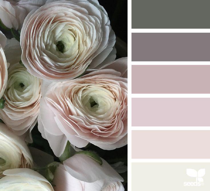 ranunculus mood | design seeds | Bloglovin'
