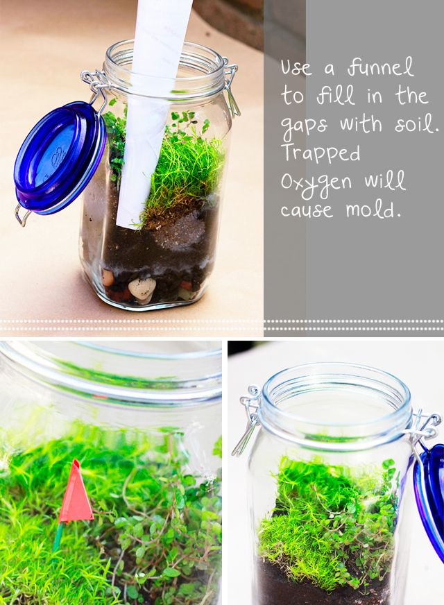 """""""Terrarium DIY"""" - Yay! Now I know what I want to do with all those jars I keep collecting for no random reason :)"""