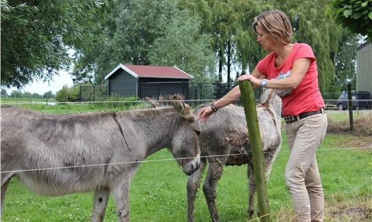 Boerin Matine neemt samen met je graag een kijkje bij hun ezels Bo & Kamiel op FarmCamps de Kamperhoek
