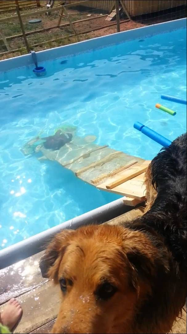 40 Awesome dog pool ramps images