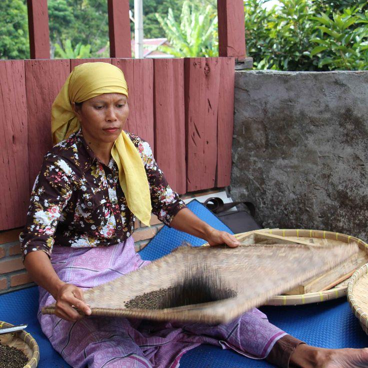 Originaire d'Indonésie, cette petite baie citronnée est très utilisé par le peuple Batak, vivant au bord du lac Toba.