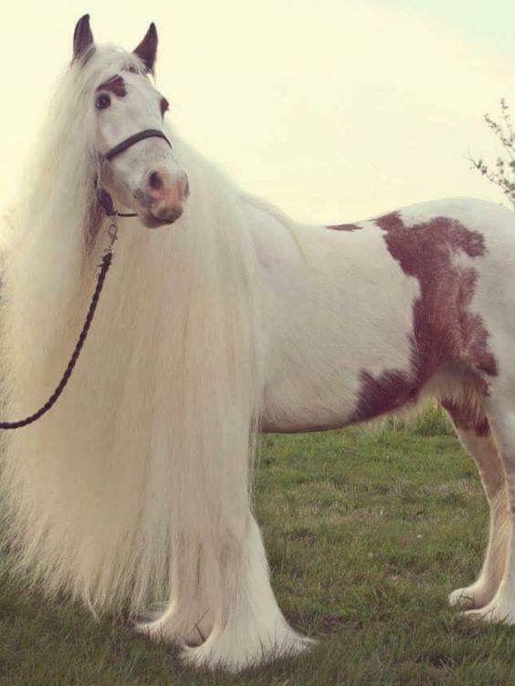 Beautiful horse.🐎