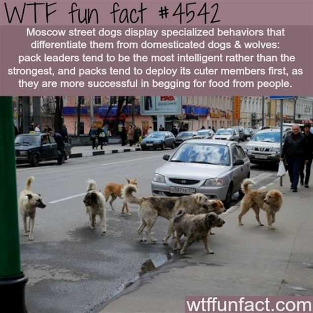 WTF fun facts is a blog for interesting facts & funniest facts. we post health, … – Megan O'Connor