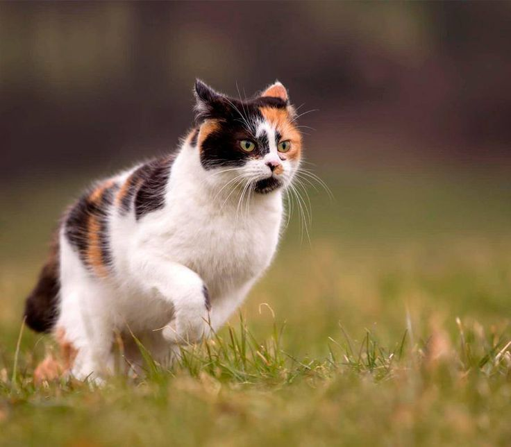#DidYouKnow that cats cannot break a sweat because they have no sweat glands. Cats regulate their temperature by expanding and contracting their arteries. #FactFriday #PetPoolWarehouse